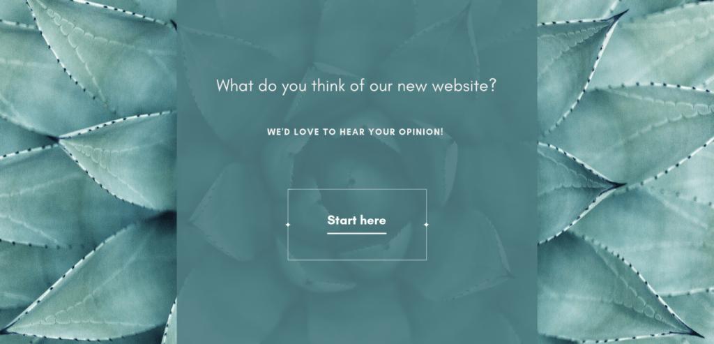 website survey introduction